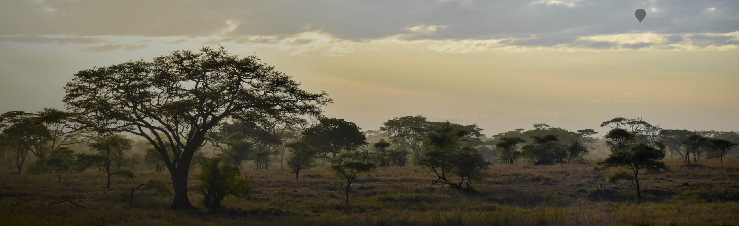 Tarangire National Park And Manyara National Park