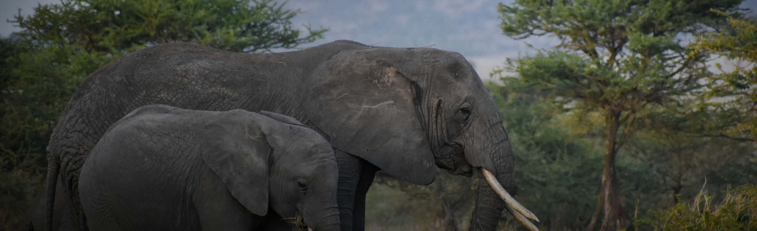 Tarangire National Park & Ngorongoro Crater